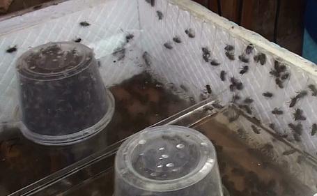 Улей для пчел из пенополистирола своими руками фото 292